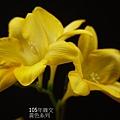 黃色系列(1).JPG