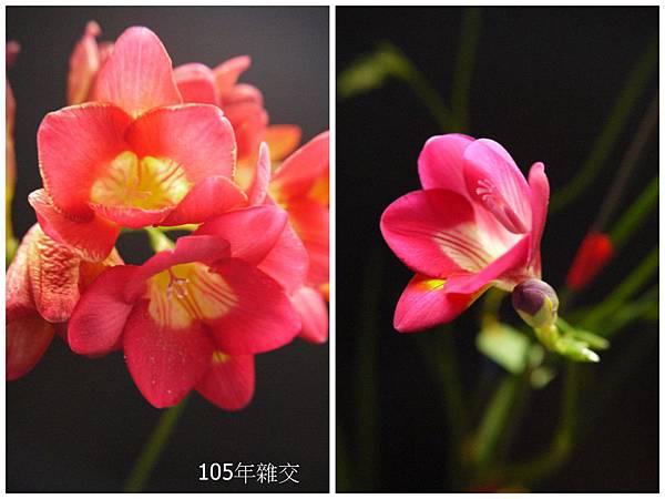 粉紅&桃紅(10).jpg