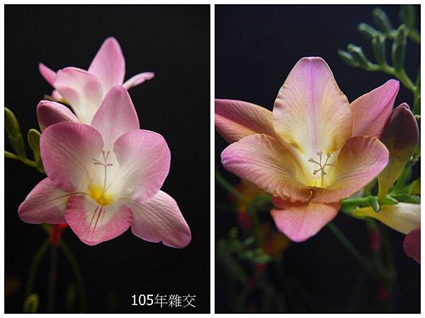 粉紅&桃紅(11).jpg