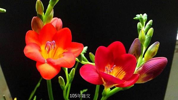 粉紅&桃紅(2).jpg