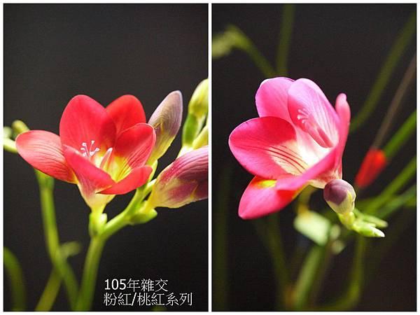 粉紅&桃紅(9).jpg