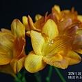 橘黃色系列(5).JPG