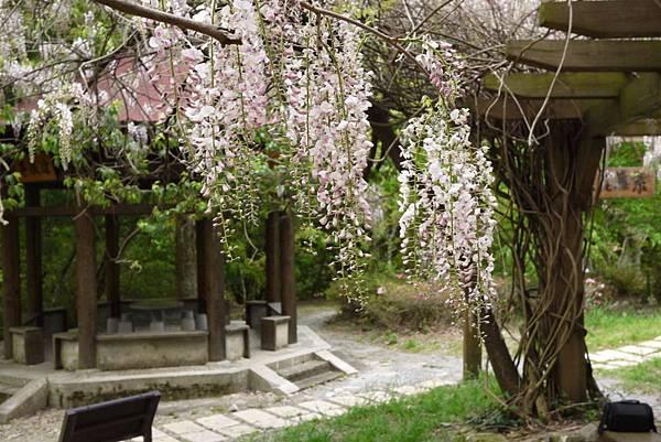 1060410武陵紫藤(110).JPG