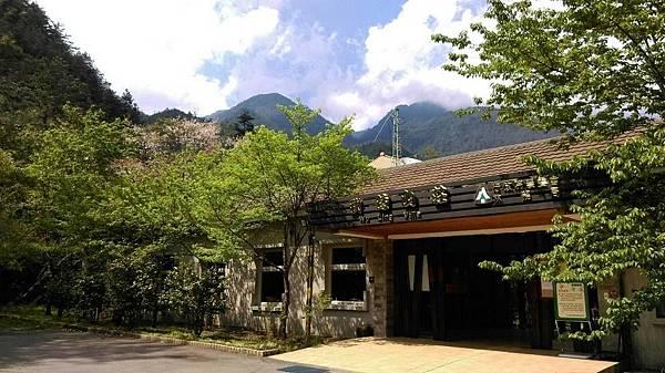 1060410武陵紫藤(4).jpg