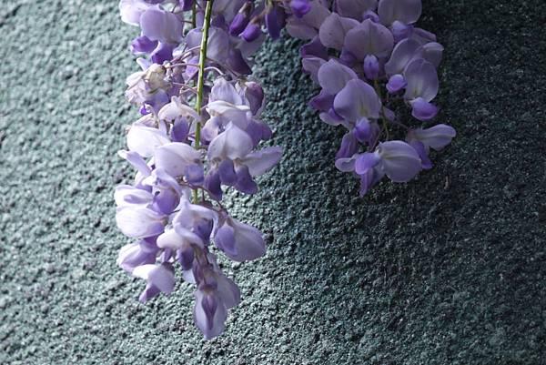 1060410武陵紫藤(54).JPG