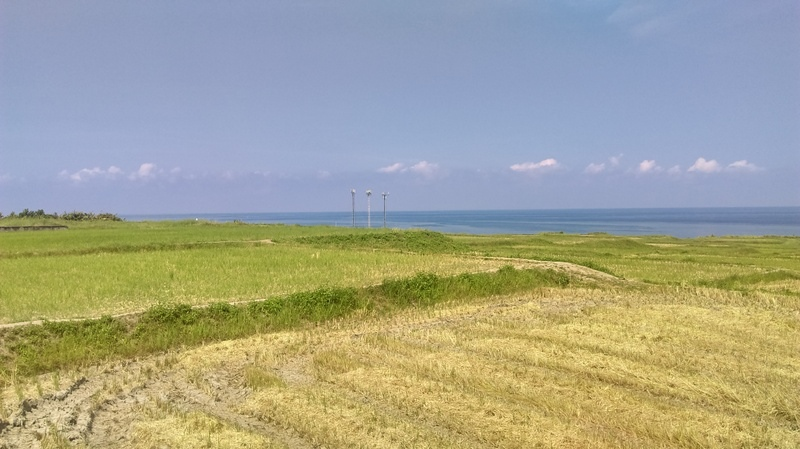 1070803新設海稻梯田(3).jpg