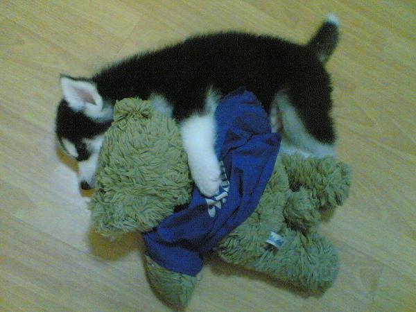 抱著Asaki熊熊睡覺覺