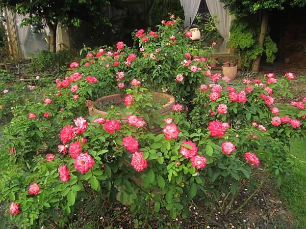 美加美玫瑰園