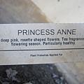 Princess Anne安妮公主