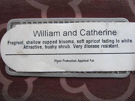 William and Catherine威廉與凱特
