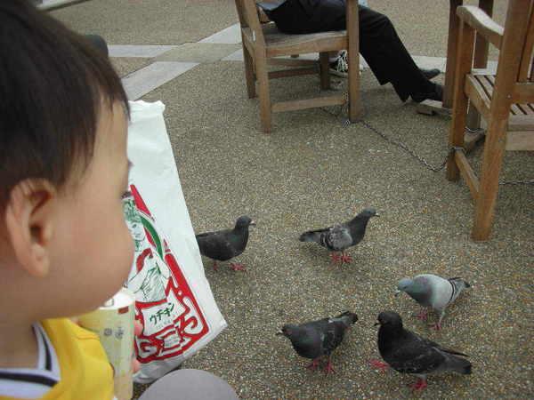 外面有長椅還有鴿子