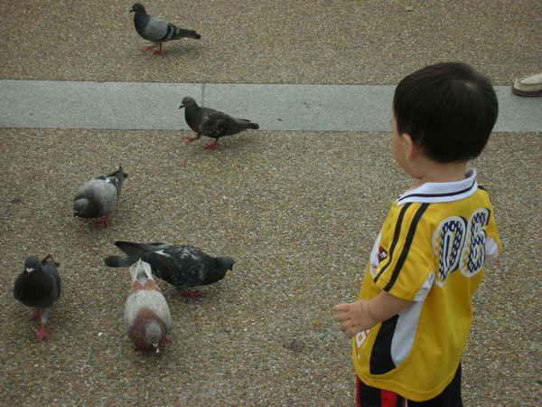 鴿鴿~我可以帶你回家嗎?