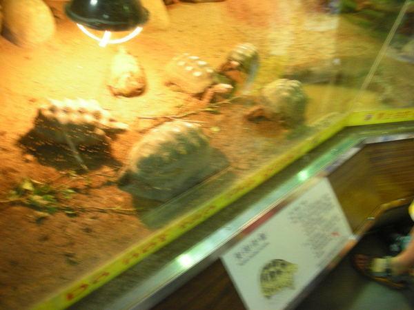 動物園的烏龜