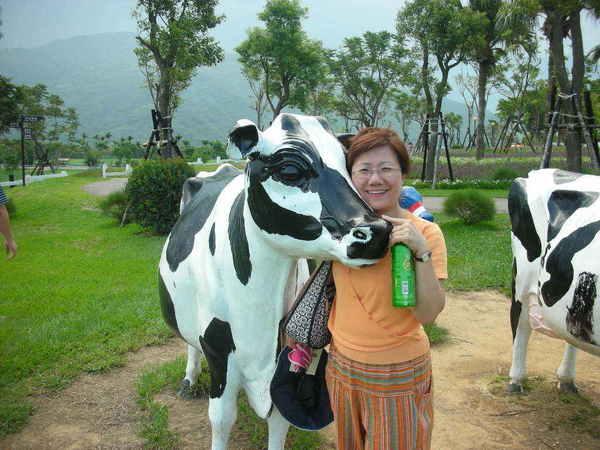 媽跟牛貼得真近~