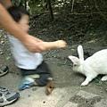 小白兔好可愛