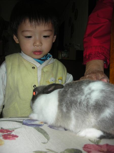 兔兔你好可愛唷
