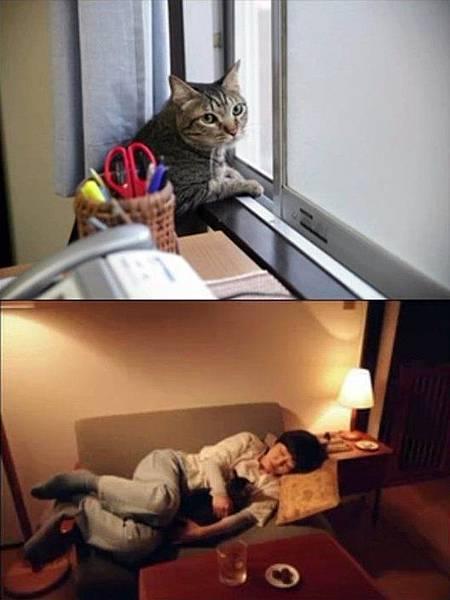 麵包和湯和貓咪的好日子01.jpg