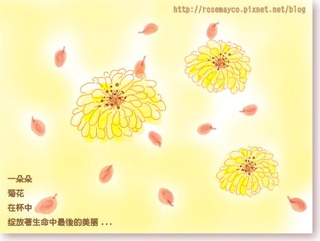 菊花-3.jpg