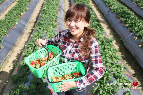 好吃的草莓 021