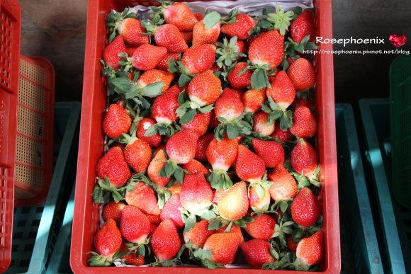 好吃的草莓 029