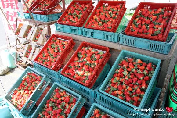 好吃的草莓 030