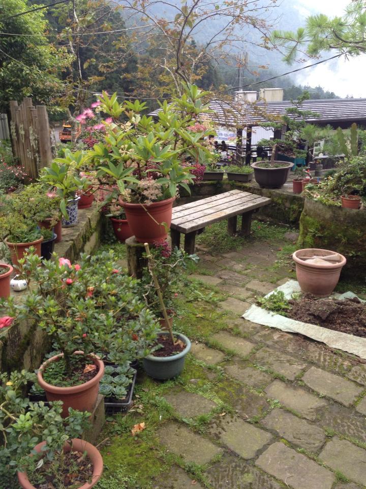 0822迷夢的小花園.jpg