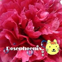 Rosephoenix牡丹-150.jpg