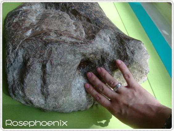 0827-省博,已瑪瑙化的恐龍化石.jpg