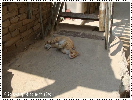 0827-煤礦堆旁的小貓咪 (1).JPG
