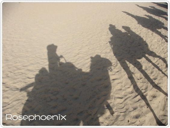 0831- 駝隊的影子.JPG