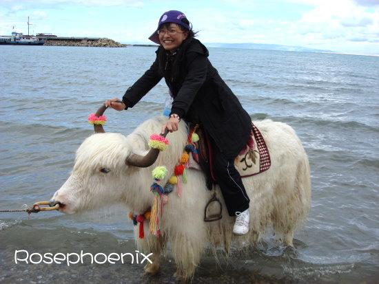 0828-小蕾騎犛牛.JPG