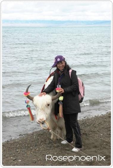 0828-小蕾和犛牛.jpg