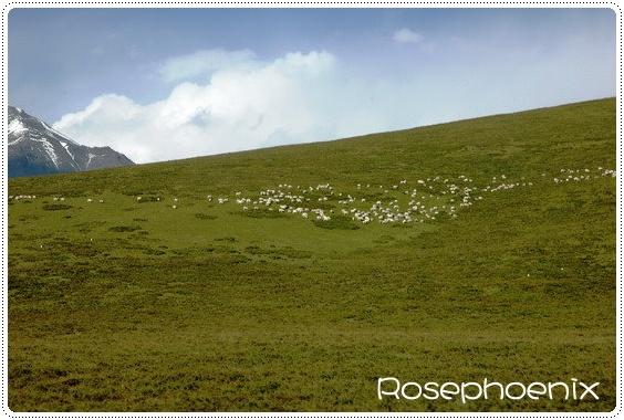 0829-羊群.jpg