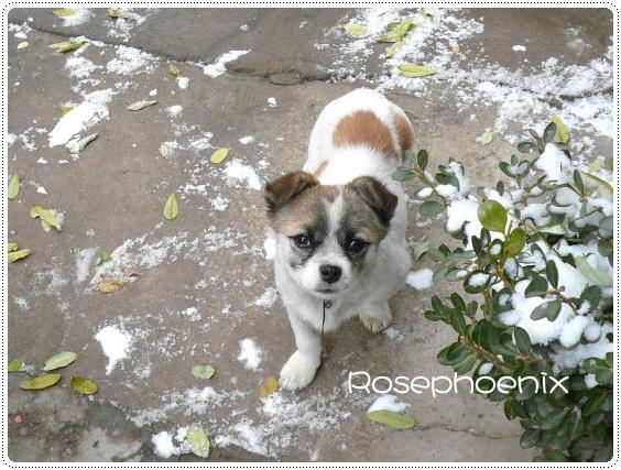 雪中的狗狗.JPG