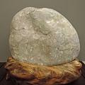 台東成功貝殼化石