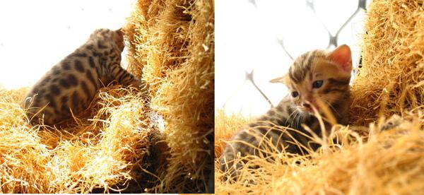 kitten 10.jpg