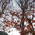 歐莉葉荷城堡32.jpg