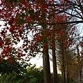 歐莉葉荷城堡34.jpg