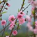 杏花林32.jpg