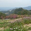 杏花林37.jpg