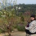 杏花林39.jpg