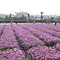 中社觀光花市40.jpg