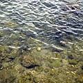 富山護魚區22.jpg