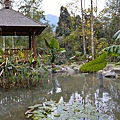 烏林雨林餐廳43.jpg