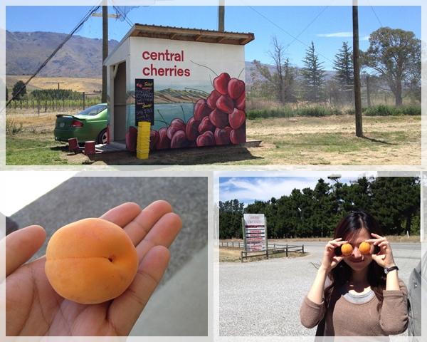 Cromwell - cherries & aprico