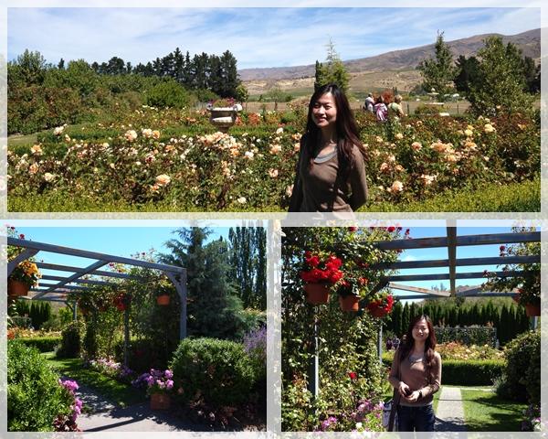 rose garden@Cromwell