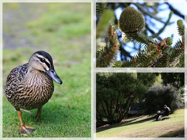 紐西蘭。皇后鎮花園