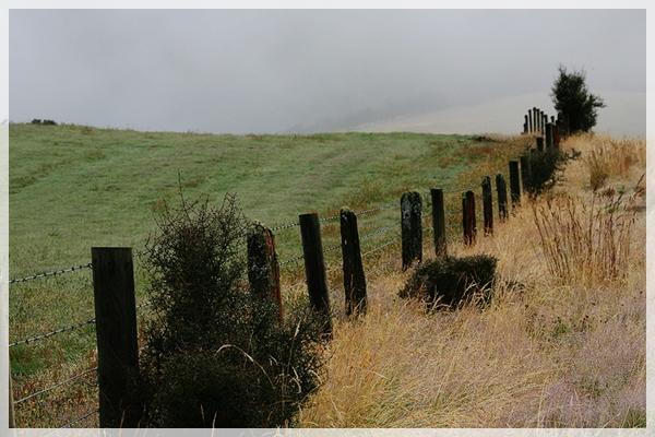 紐西蘭。米佛公路2