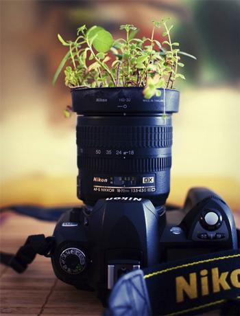 plantpot01.jpg