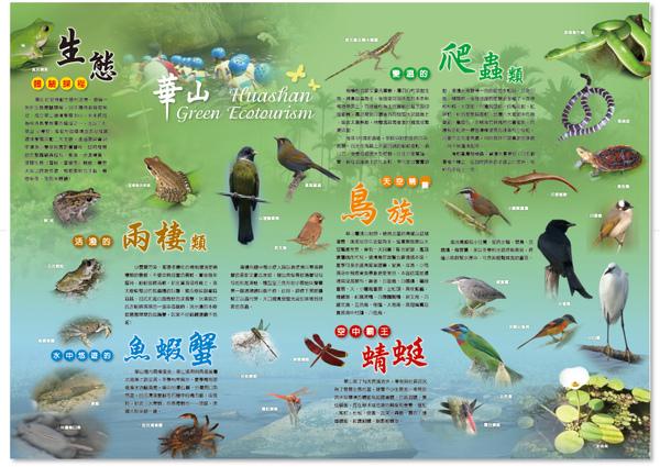 綠色華山DM07220002.jpg